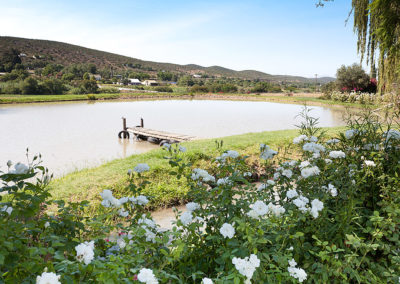 Dam at Oue Werf Country House Oudtshoorn